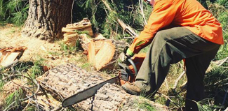 Riverside California Tree Services